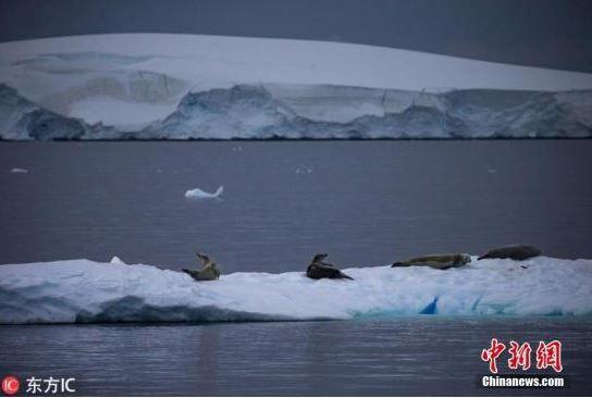 因全球变暖 南极气温零上天数或增一倍
