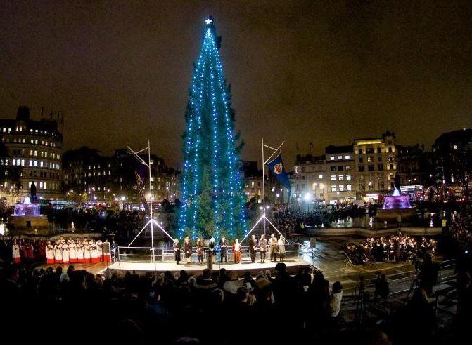"""伦敦这棵圣诞树被嘲""""营养不良""""!但它的故事让人们闭上了嘴"""