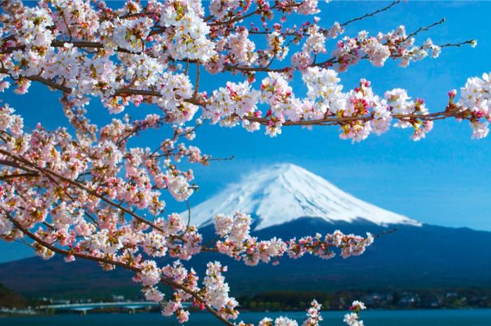 安倍宣布东京都等7个地区进入紧急状态