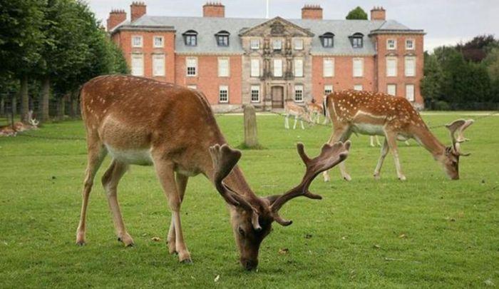 英国掀解封出游热!National Trust花园重开已订满,哪里好玩又安全?