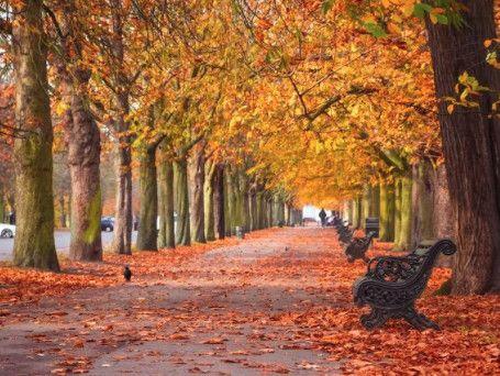 伦敦的秋天别辜负,哪里最美最治愈?捡板栗、赏红叶、摘南瓜……