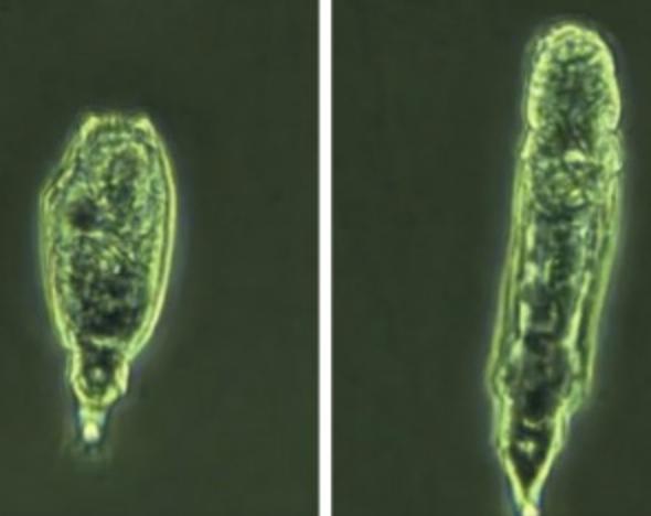 """俄罗斯科学家成功""""复活""""2.4万年前微生物"""